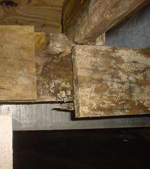 Extensive basement rot found in Lowell by Northeast Basement Systems