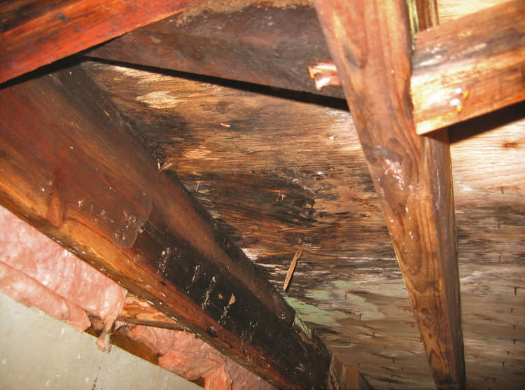 Crawl Space Mold Amp Rot In Boston Manchester Lowell Ma