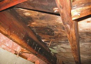 Extensive crawl space rot damage growing in Lexington
